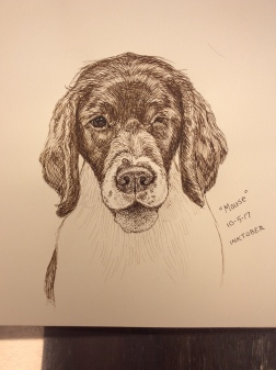 Mouse, one of my own dogs, sketched from life in pen-and-ink for #inktober