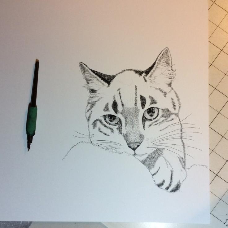Work in progress of cat in pen-and-ink