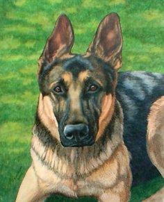 """Angus"", mixed media of German Shepherd"