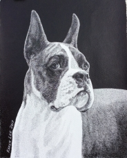 Boxer headstudy in pen and ink