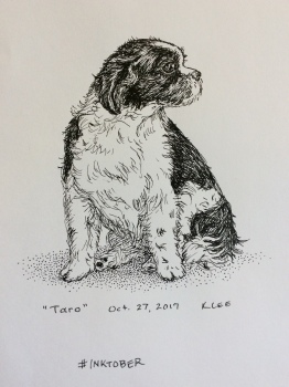 Shih Tzu sketched from life in pen-and-ink for #inktober challenge