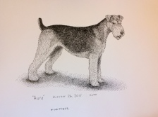 Airedale Terrier sketched from life in pen-and-ink for #inktober