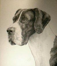 """Wolfie"", pen-and-ink of Great Dane Ch. Davishire Beowolf of Chalk Hill"