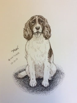 Mac, one of my own dogs, sketched from life in pen-and-ink for #inktober