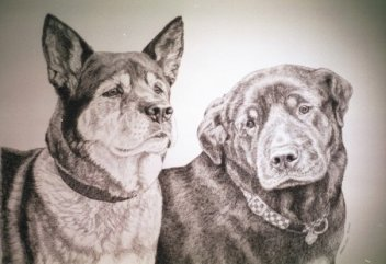 """""""Sundance and Brandy"""", pen-and-ink of Akita and Rottweiler"""