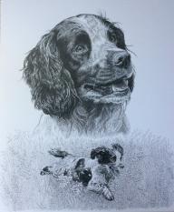 "Pen-and-ink portrait of English Cocker Spaniel ""Ritz"""
