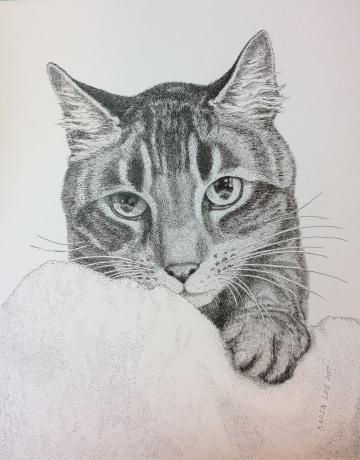 Pen-and-ink cat portrait