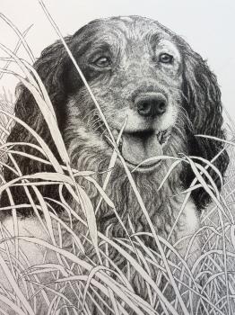 Detail of English Cocker Spaniel portrait